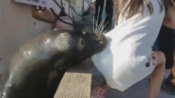 Vidéo d'une jeune fille tirée dans l'eau par une otarie au