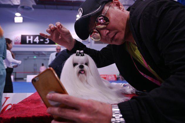 Chine: un concours de chiens dans le pays où on les