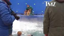 Aucun chien n'a été maltraité dans une vidéo conçue pour