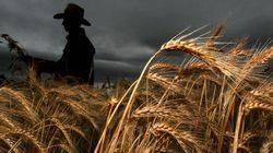 PTP: «Les agriculteurs canadiens viennent de se faire