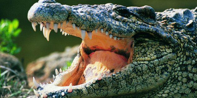 Un crocodile arrache la main d'une femme en