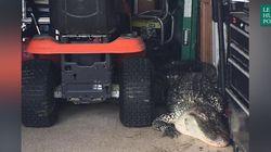 «Chérie, il y a un alligator dans le garage!»