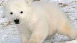 Un bébé ours