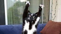 Ce chat a un bien étrange