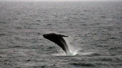 Il se sort vivant d'une collision avec une baleine à