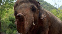 Un éléphant tue une fillette de sept ans dans un