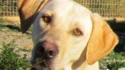 Les demandes de permis pour chiens