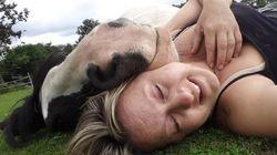 Faire la sieste avec un cheval, ce n'est pas de tout repos