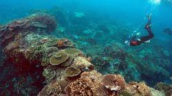 La Grande Barrière de corail plus malade que jamais