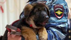 Dobrynya, le chien russe offert à la France, serait «inapte au