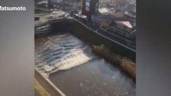 Les images du séisme et du tsunami au