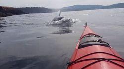 Une trentaine d'épaulards surprennent deux kayakistes