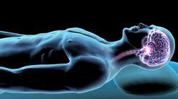 Que fait votre cerveau la nuit quand vous dormez?
