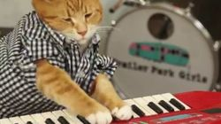 Keyboard Cat est de