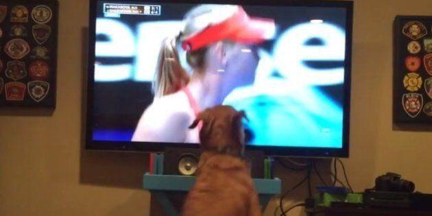 Open d'Australie: ce chien est le plus grand admirateur de Sharapova au
