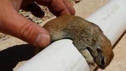 Un réparateur de piscine sauve un écureuil de la noyade