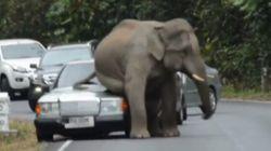 Éléphant 2 - Voiture