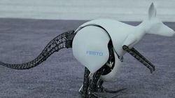 Oui, ce kangourou robot peut vraiment sauter