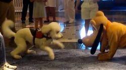Quand un vrai chien rencontre (un faux) Pluto