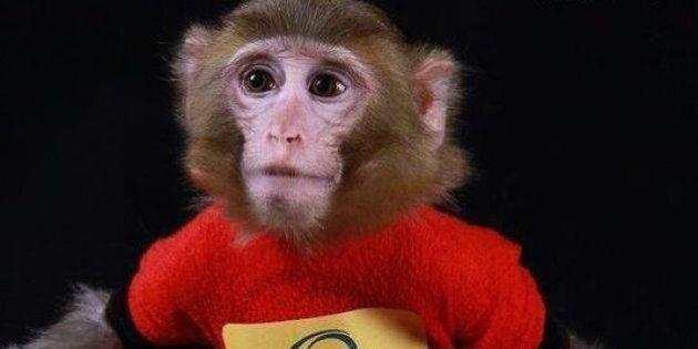 L'Iran annonce avoir envoyé un deuxième singe dans