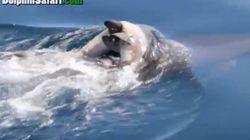 L'émouvant cortège funèbre des dauphins
