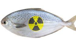 Un poisson radioactif près de