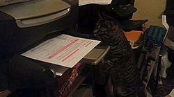 Le chat qui n'aimait pas les imprimantes