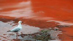 La plage de Bondi devient toute rouge