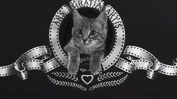 Et le vainqueur du festival mondial du film de chat