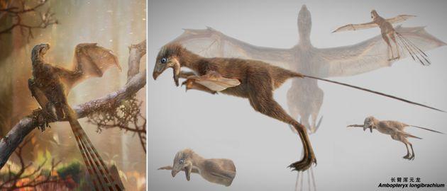 Ce dinosaure avait des ailes de