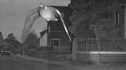 Γερμανία: Περιστέρι πετά πάνω από το όριο ταχύτητας και η εικόνα του γίνεται