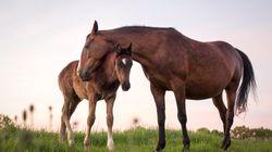 Γιατί τα άλογα κοιμούνται