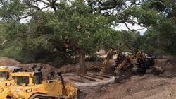 Καλιφόρνια: Ζευγάρι ξερίζωσε δέντρο και τώρα θα πληρώσει 600.000
