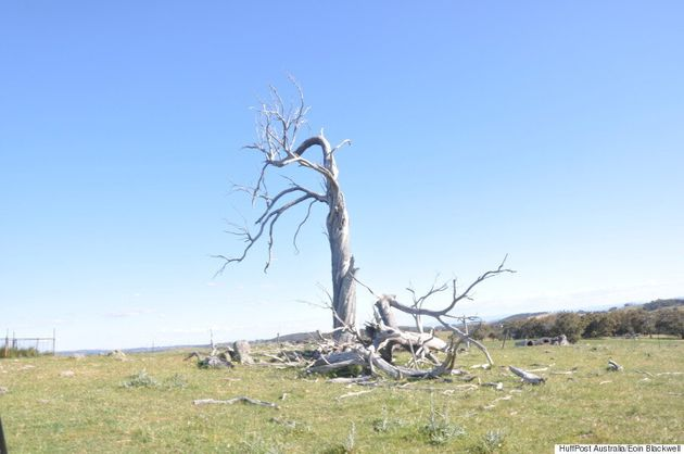 The Stiff Winds Blowing Through The Yass