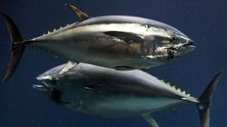 Your 10 Favourite Tuna Brands, Ranked From Eco-Friendliest To