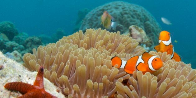 13 Fun Facts You Didn't Know About The Great Barrier