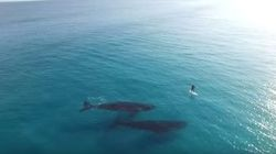 You Should Probably Go Paddle Boarding With Enormous Whales