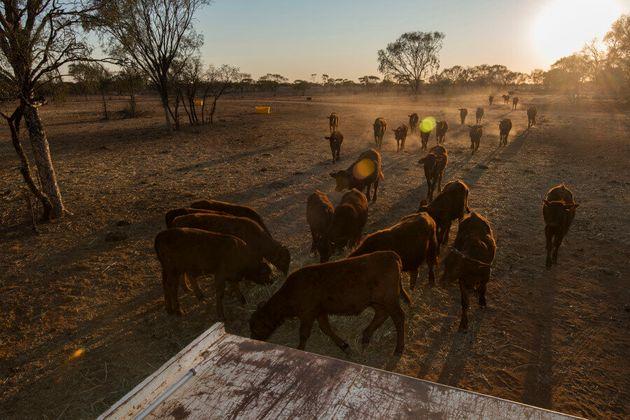 Longreach Farmers And Society Struggling Through