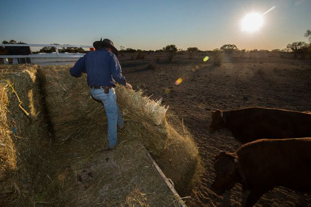 Longreach Farmers And Society Struggling Through