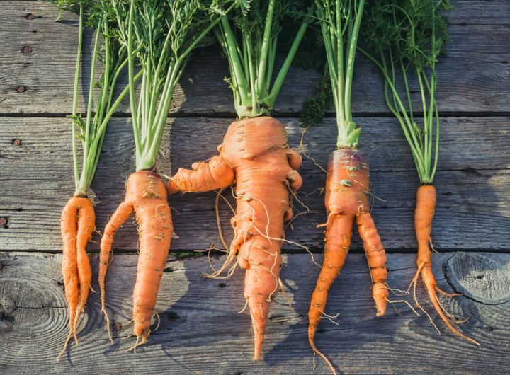 These carrots might look a little funny but they're still delicious and edible.