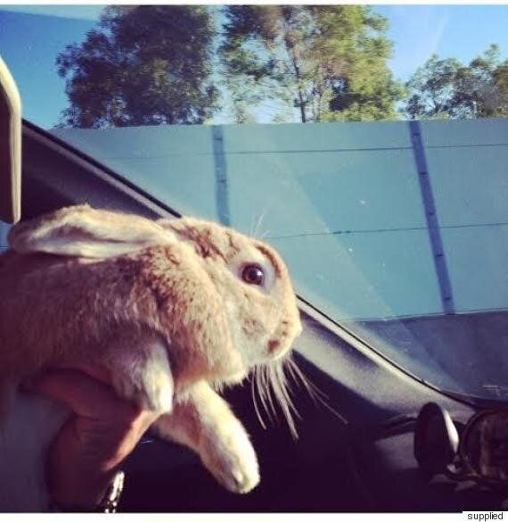 Travelling With Your Pet In