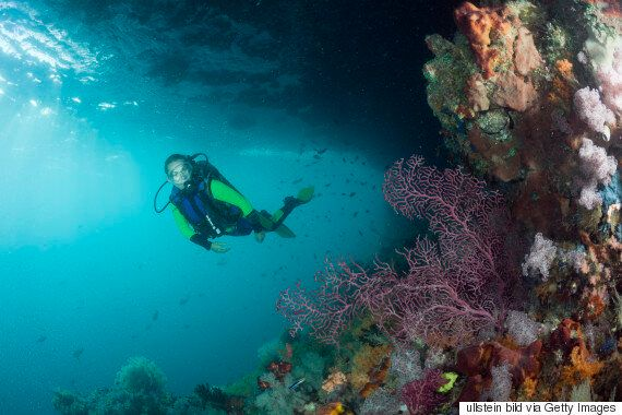 The Dive-Friendly Marine Reserve Holidays Within A Few Hours Of
