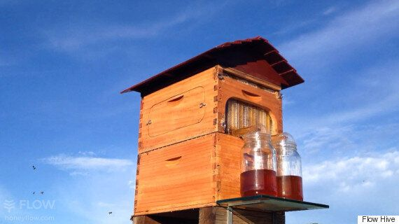 How A Byron Bay Beekeeper Became A Multi-Million Dollar Businessman
