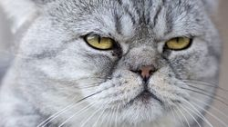 Some Cat Colours Linked To Aggression, But Don't Base Your Pet Choice On