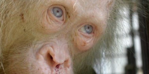 The incredibly cute primate was held in captivity for two days before she was rescued.