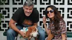 Meet George And Amal Clooney's New Best