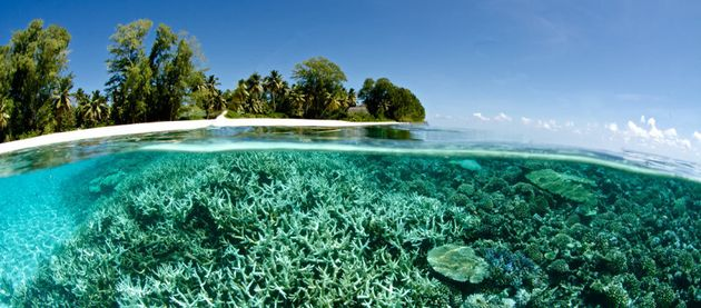 Coral is bleaching currently in the Maldives and