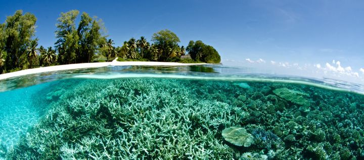Coral is bleaching currently in the Maldives and Indonesia.