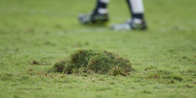 This mound of turf was kicked up by a rugby game. That happens a lot, and it doesn't exactly make the...