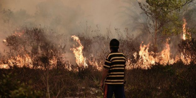 A villager looks at a peatland fire on the outskirts of Palangkaraya city, Central Kalimantan on October...